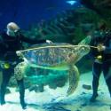 Zoom sur les aquariums de Rome